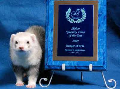 AFA 2009 Shelter Specialty Ferret of the Year - Ranger of FPK