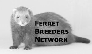 Ferret Breeders Network